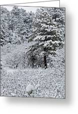 Snowstorm In The Pike National Forest Greeting Card