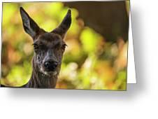 Stunning Hind Doe Red Deer Cervus Elaphus In Dappled Sunlight Fo Greeting Card
