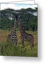 Tanzania Greeting Card