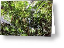 The El Yunque National Forest, Puerto Rico Greeting Card