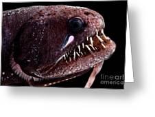 Threadfin Dragonfish Greeting Card