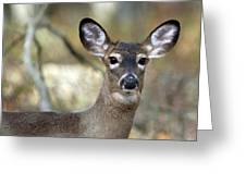 White Tailed Deer Smithtown New York Greeting Card