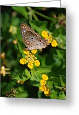 5 Yellow Flowers And A Buttefly Greeting Card
