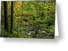 North Carolina Fall Colors Greeting Card