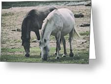 Wild Mustangs Greeting Card