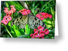 5050- Butterfly Greeting Card