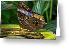 5113- Butterfly Greeting Card