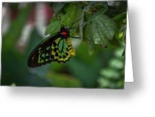5156- Butterfly Greeting Card