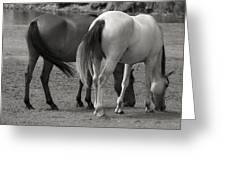 Wild Mustangs Greeting Card