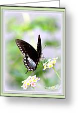 5276-001- Butterfly - Swallowtail Greeting Card