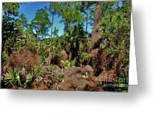 55- Everglades Afternoon Greeting Card