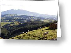 New Zealand Greeting Card