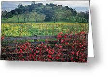 5b6301 Vineyards Of Color Greeting Card