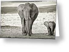 African Elephant In The Masai Mara Greeting Card