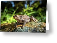 Amphibian, Common British Toad / Frog Greeting Card