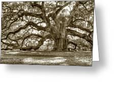 Angel Oak Live Oak Tree Greeting Card