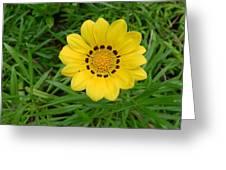 Australia - Daisy With Yellow Petals Greeting Card
