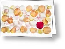 Back Lit Flower Petals  Greeting Card