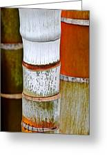 Bamboo Palm Greeting Card