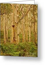 Boranup Forest II Greeting Card