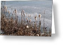 Bulrush Greeting Card