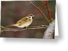 Eurasian Tree Sparrow Greeting Card