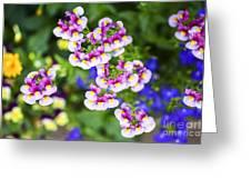 Flowering Garden.  Greeting Card