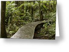 Forest Boardwalk Greeting Card