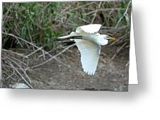 Great Egret Building A Nest Greeting Card