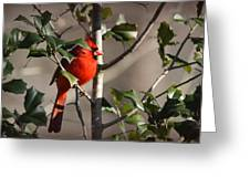 Img_0001 - Northern Cardinal Greeting Card