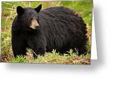 Maine Black Bear Greeting Card