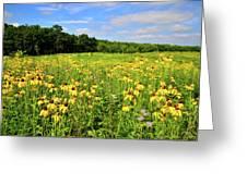 Marengo Ridge Wildflowers Greeting Card
