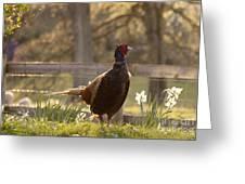 Mr Pheasant Greeting Card