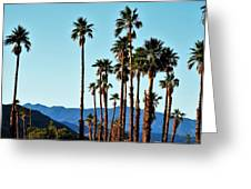 Palm Springs Greeting Card
