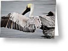 Pelican Take Off Greeting Card