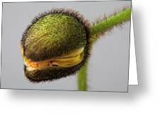 Poppy Bud Greeting Card