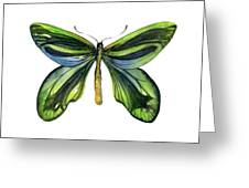 6 Queen Alexandra Butterfly Greeting Card