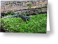 Slimy Salamander Greeting Card