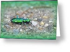 6-spotted Green Tiger Beetle Greeting Card
