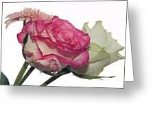 Three Flowers Greeting Card