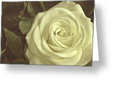 Timeless Rose Greeting Card