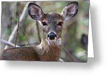 White Tailed Deer Smithtown New York Greeting Card