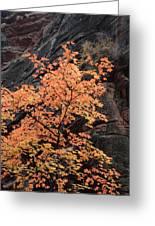 Zion Autumn Foliage Greeting Card