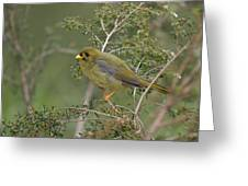 Bellbird Greeting Card