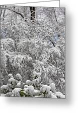 Snow And Branches Greeting Card