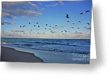 65- Black Skimmers Greeting Card