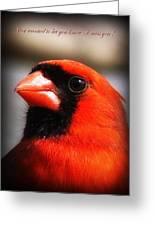 6751-010 Cardinal - Miss You Greeting Card
