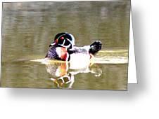 6966 - Wood Duck Greeting Card