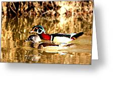 6980 - Wood Duck Greeting Card