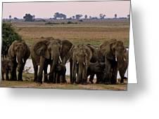Botswana Greeting Card